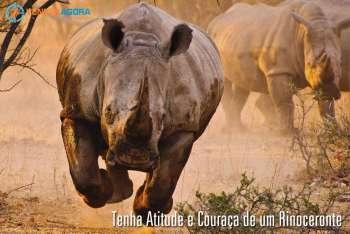 Tenha Atitude e Couraça de um Rinoceronte